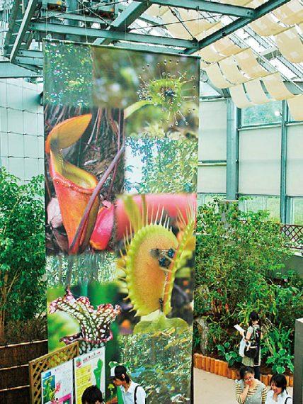 2017年9月10(日)まで、企画展「食虫植物展 もっと知りたい!植物の技」を開催