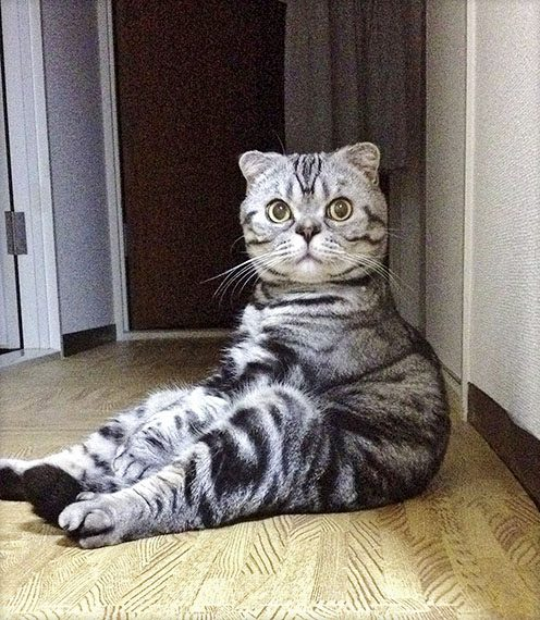 Tacoさんの愛猫・ししまるくん