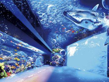 クジラやイロワケイルカが泳ぐ大迫力の海の世界をプロジェクションマッピングで体験しよう