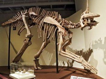 恐竜やナウマンゾウの骨格の複製が登場!ふくしまの自然史に迫る!!