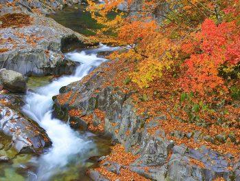 カメラマンたちも絶賛!中津川渓谷の秋