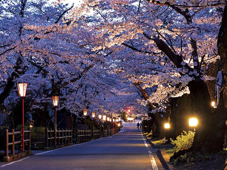 岳温泉の「桜坂」。満開時には道が左右の並木に覆われて桜のトンネルに。「鏡ヶ池」まで下って振り返ると、残雪の安達太良山と桜が水面に映る。池辺にはミズバショウの花も