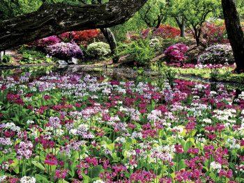 色とりどりの花が次々咲き乱れる桃源郷