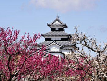 紅白の梅の中に佇む、総石垣造りの城
