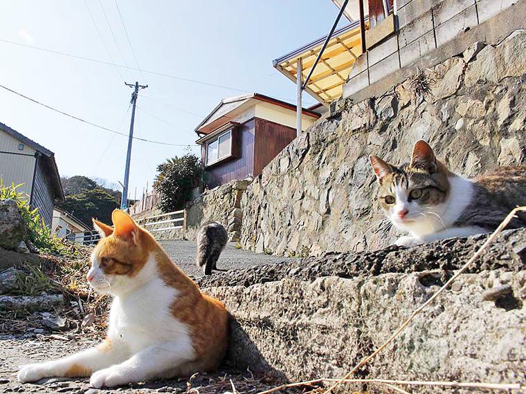 島の至る所に猫!人懐こい子が多い