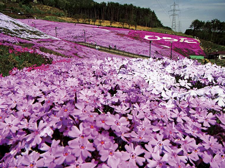 平田村内をやさしく流れていく、清らかな風に揺られる芝桜を愛でる。日常から離れて、心安らぐ時間をここ「ジュピアランドひらた」でゆったりと過ごしてみては