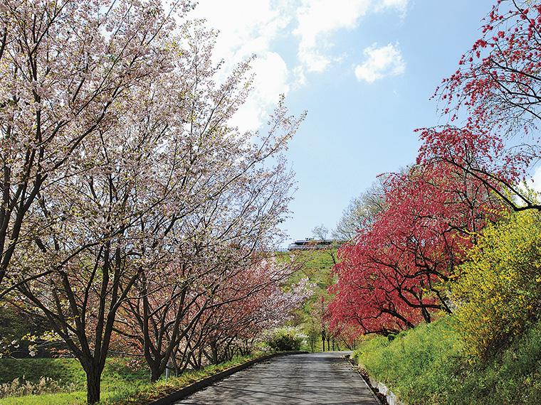 4月下旬には濃いハナモモとピンクの八重桜が咲き、萌え始めた新緑を鮮やかに彩る中を初夏の風が心地良く吹き抜ける