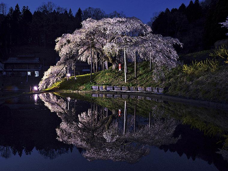 夜間、ライトアップされた「中島の地蔵桜」が手前の水田に映る姿は一見の価値あり