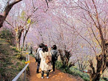 福島県北エリアのイチオシ花見スポット
