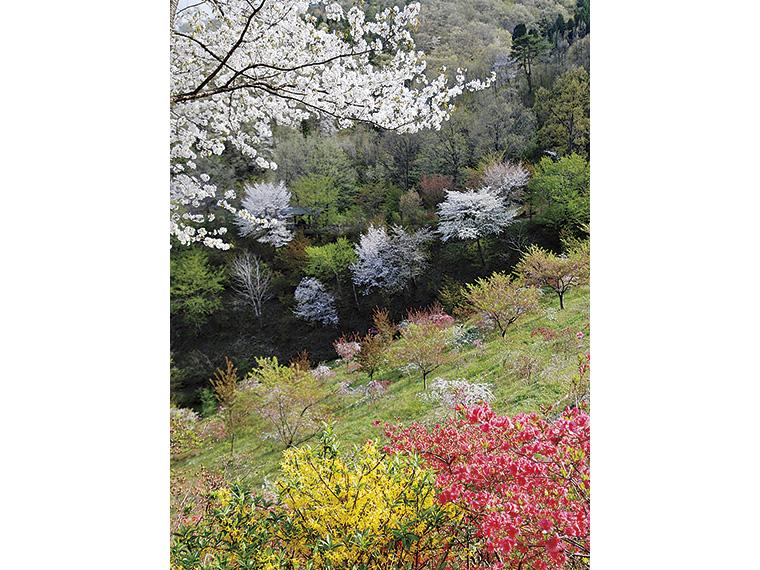 散策路からは、場所によってさまざまな花模様を楽しめる