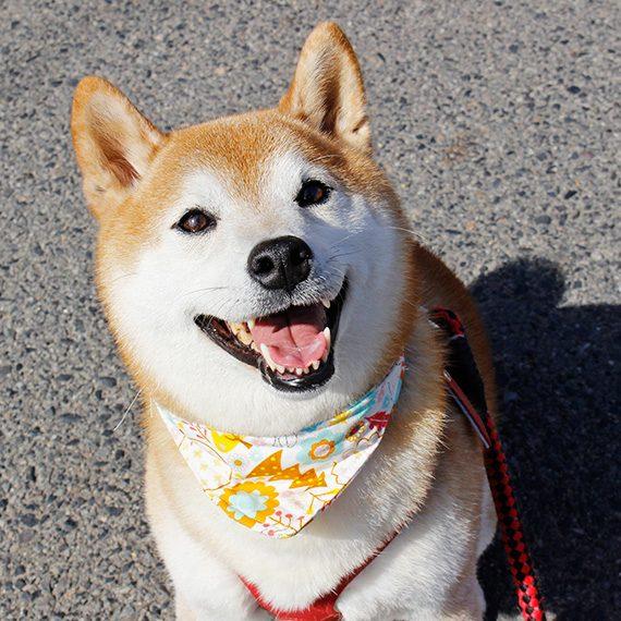 永田さんが手作りしたバンダナをつけ、にっこり笑顔の仁をパシャリ!