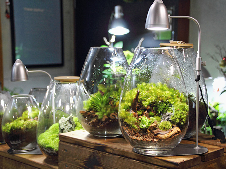 ガラス容器内で植物を育て鑑賞するのが「テラリウム」。「苔玉」もインテリアに人気