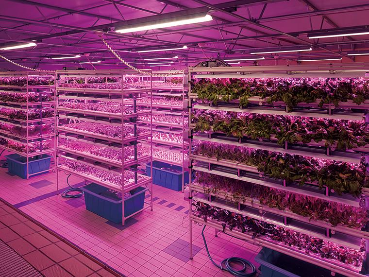 LEDの光と液肥入りの養液で栄養価の高い野菜を育てるサラダ工房。館内栽培なので採れたてが味わえる