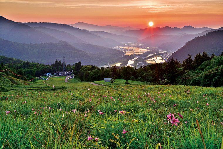 会津高原南郷スキー場にあるヒメサユリの一大群生地