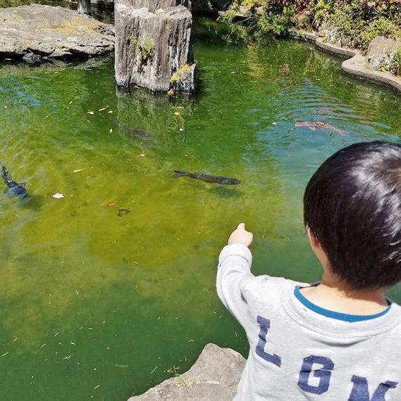 池の鯉を眺めるのだって、子どもにとってはレジャー