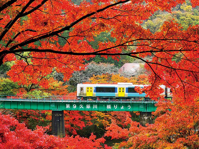 久慈川を渡る電車と矢祭山。四季折々の花々が楽しめる景勝地としても知られている。散策コースが整備され、秋にはもみじが紅色に染まる。見頃は11月初旬から11月下旬