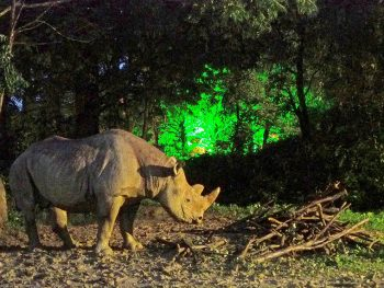 夜の動物公園で、普段見ることができない動物たちの姿を楽しむ