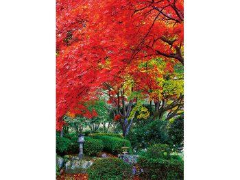 明治維新の歴史感じる園内で樹齢100年超の大樹の紅葉を愛でる