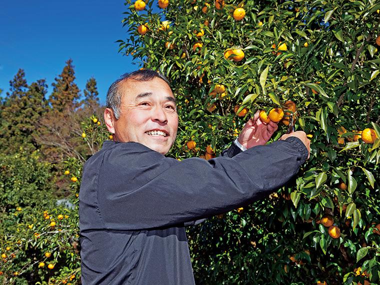 矢祭町特産のゆず。さわやかな香りと大ぶりの果実が特徴