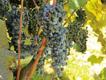 二本松市の豊かな自然の中、おいしいワインで乾杯!