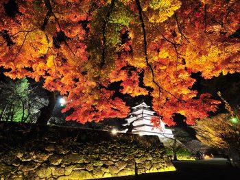 紅葉で彩られた鶴ヶ城のライトアップを見に行こう