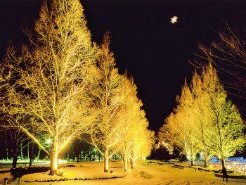 「あづま総合運動公園」内の大木が神秘的にライトアップ!