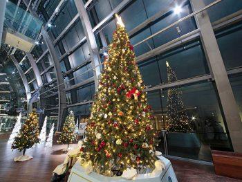きらめくイルミネーション、輝く魚たちと水族館で素敵なクリスマスを過ごそう
