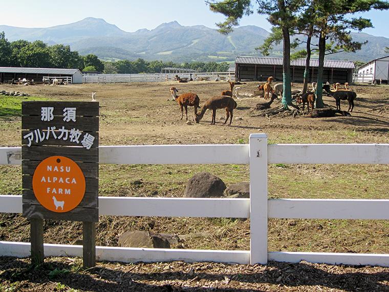 牧場は、名山・茶臼岳の麓