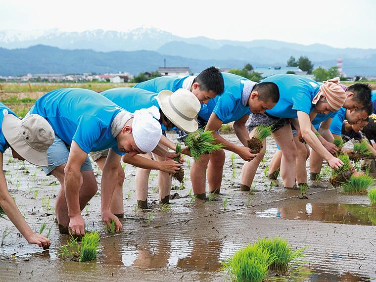 熟練農家に指導を受けながら、東京の某有名寿司店スタッフが、会津まで田植え体験にやってくる