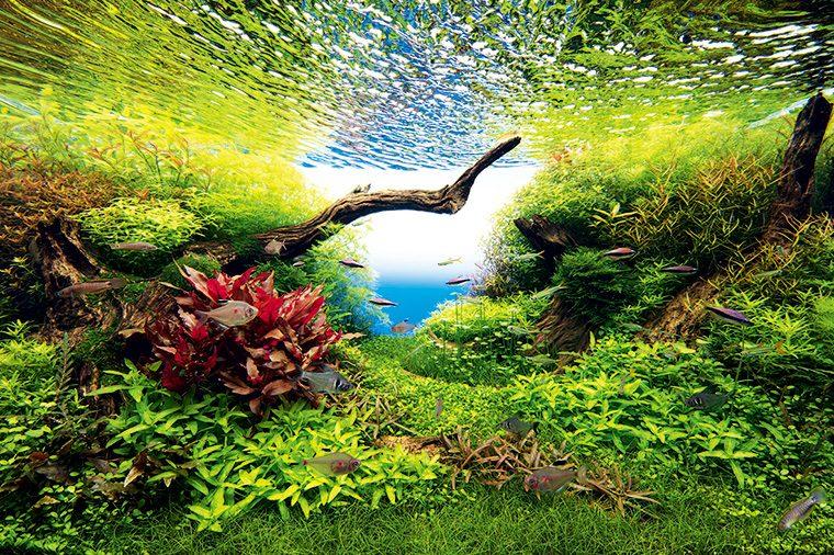 「NATURE AQUARIUM」の水景(イメージ)