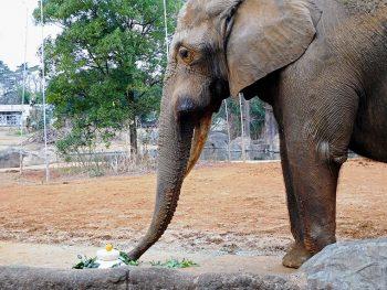 動物公園で新年を動物たちと一緒に祝おう!
