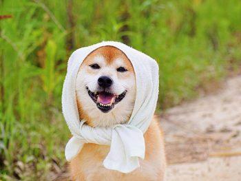 かわいいペット写真を大募集中!