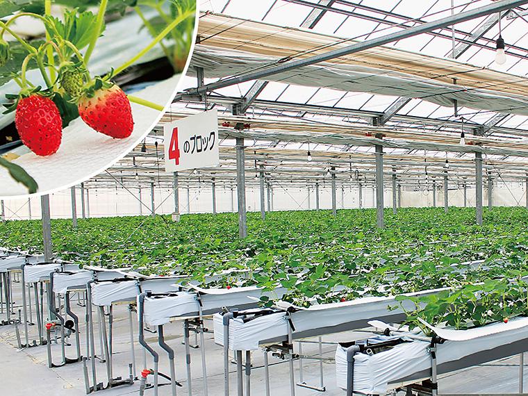 『四季の里』で旬のイチゴを味わった後は、周辺の気になるお店を散策!