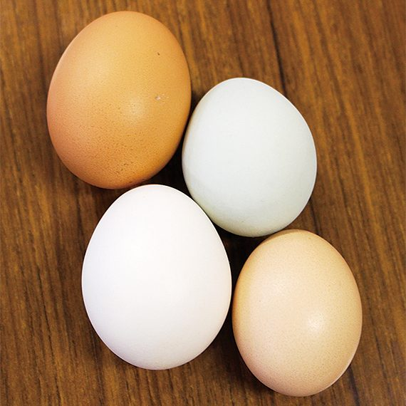 うつしの森で育った栄養たっぷりの卵。4種類(左上から、会津地鶏、アローカナ、白色レグホン、烏骨鶏)を詰め合わせた「にじたま(6個入り)」(540円)を販売中。取り扱い店は、HPで確認を