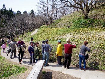 喜多方に春を告げる福寿草を見に行こう!「沼ノ平そば」やヤマメの塩焼きも
