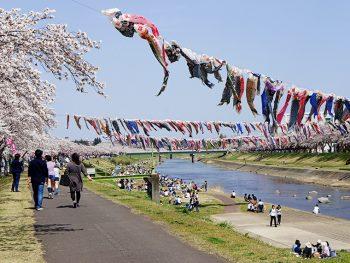 500匹以上の鯉のぼりが、須賀川市・釈迦堂川の上で悠々と泳ぐ!