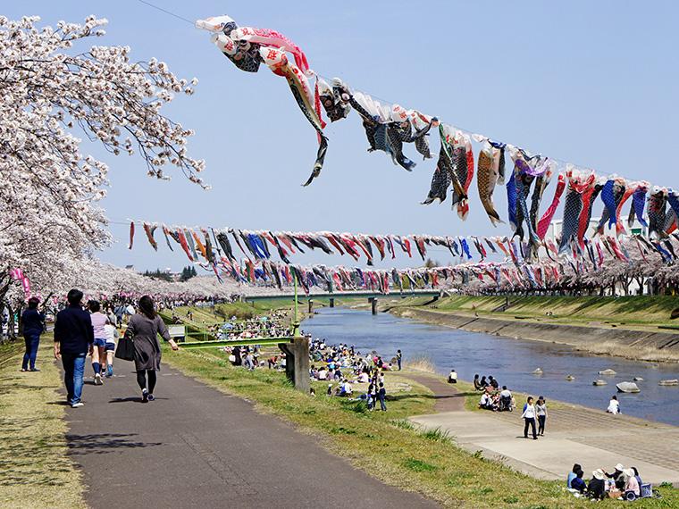 【~5月14日(火)須賀川市】釈迦堂川の鯉のぼり川渡し(掲揚)
