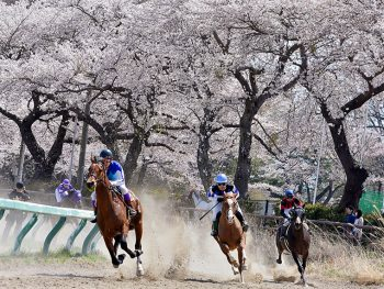 『相馬野馬追』の騎馬武者がジョッキースタイルで駆け競う!