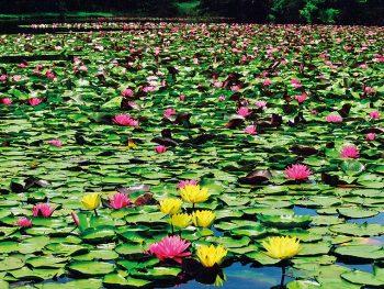 初夏ならではの百花繚乱の庭園。多彩な美しさと歴史を堪能する