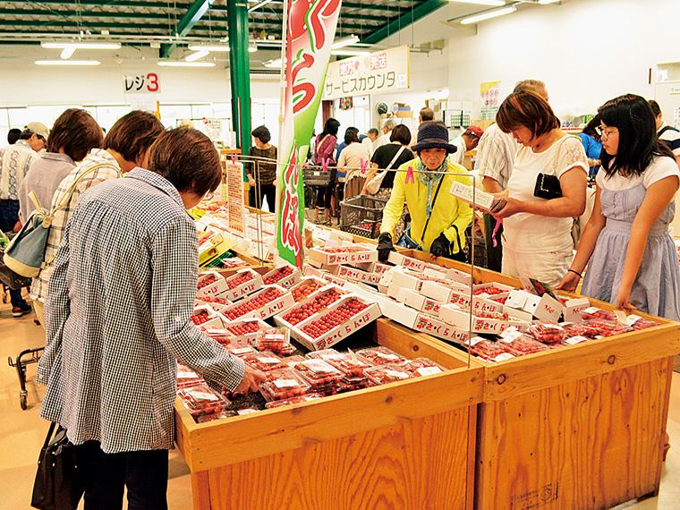 収穫の最盛期には「JAふくしま未来」管内の各直売所にて「さくらんぼまつり」を開催。詳しくは近くの直売所まで