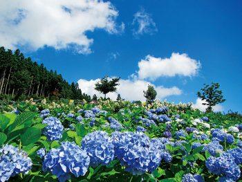 「世界のあじさい園・ゆり園」は6月から開催!品種数世界一を誇るアジサイを見に平田村へ