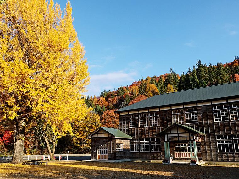 樹齢110年を超える喰丸小のシンボル大イチョウ。高さは約18mあり、校庭を黄金色に染める落葉が見事