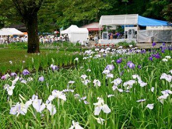 色とりどりに咲き誇る10万株のアヤメを「伊佐須美神社」に見に行こう