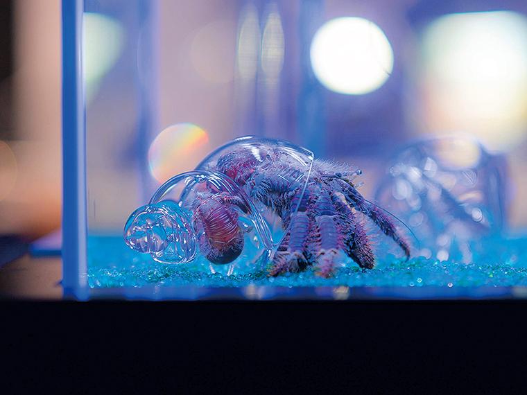 ヤドカリの貝の内側の構造を観察!