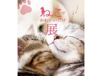 【招待券プレゼントあり】究極のにやにや空間!猫のキュートな姿に癒されよう