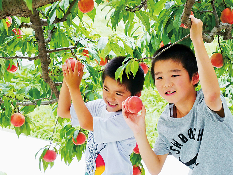 伊達のおいしい「桃」を楽しむフェアや、道の駅で体験できる桃狩り情報をご紹介!