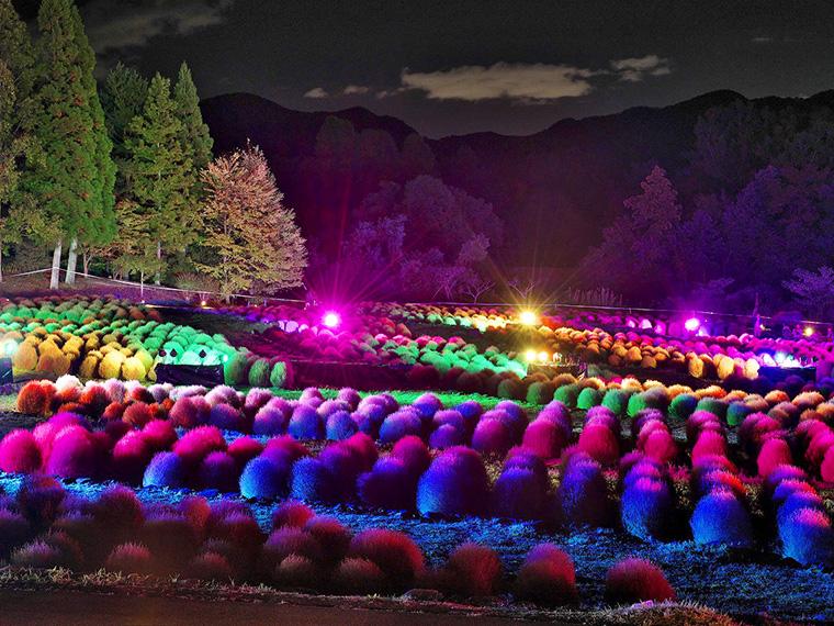 ライトアップイベント「コキアカリ」(10月12日(土)~14日(祝))の様子