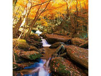 山を彩る紅葉、黄色に輝くゆず。矢祭山で秋をとことん楽しむ