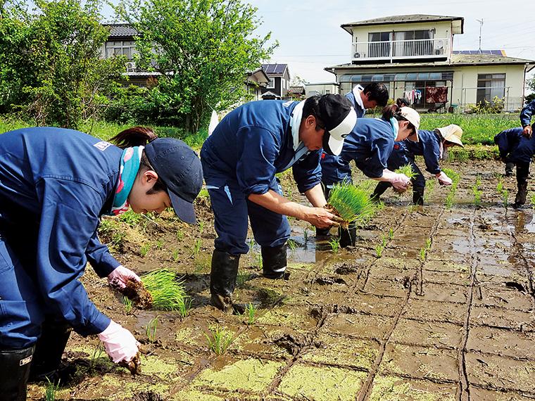 二本松産の米「五百万石」を100%使用。二本松市内の田で行った田植えの様子