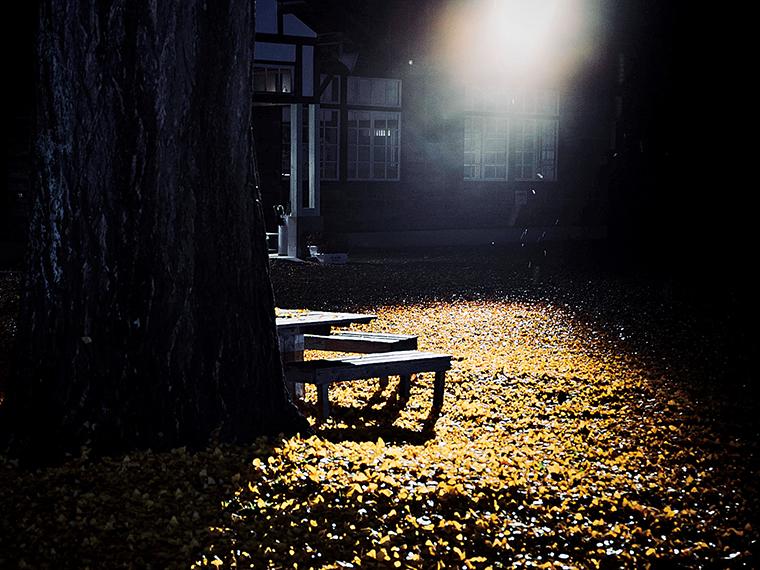 校庭を金色に染める落葉は見事